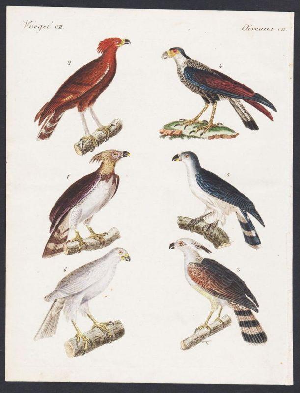 - eagle eagles Adler bird birds Vogel Vögel engraving antique print Bertuch