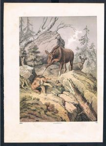 Luchs lynx Elch moose Jagd hunting animals animal Original Druck print