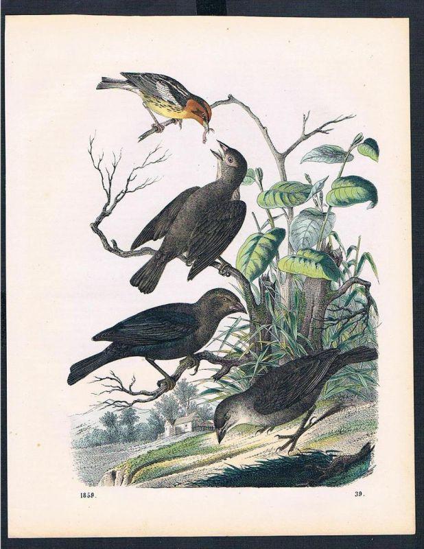 Vogel Vögel bird birds Fütterung feeding Original Druck print