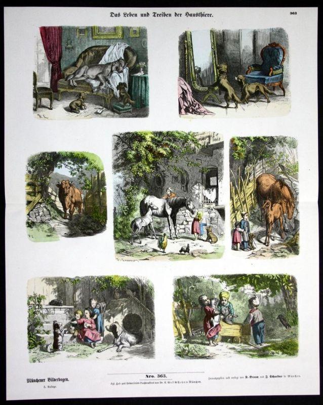 Leben der Haustiere Pferd Pferde Hund Hunde Kuh Münchener Bilderbogen
