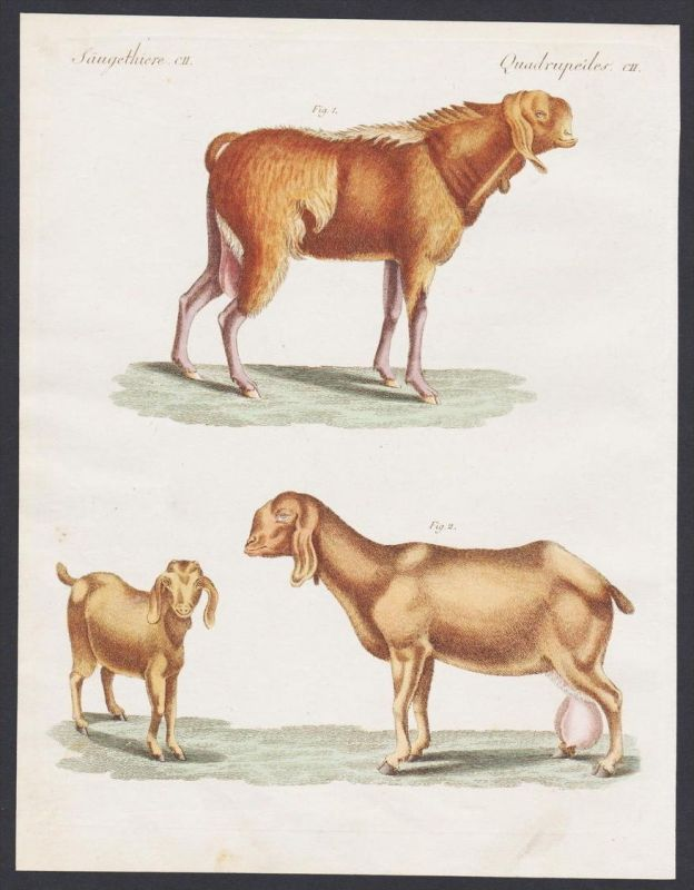 - goat goats Ziege Ziegen Egypt Ägypten engraving antique print Bertuch