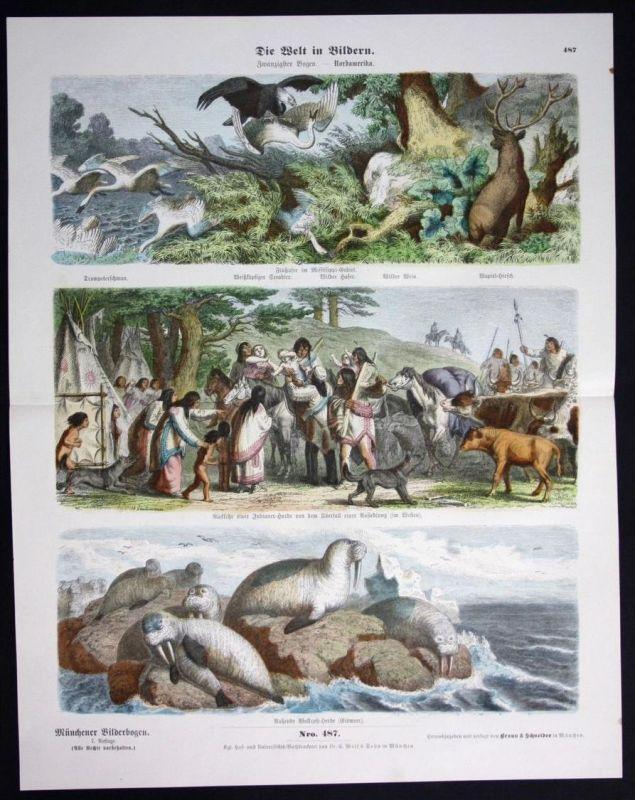 Nordamerika Amerika Indianer Walroß Eismeer Schwan Münchener Bilderbogen