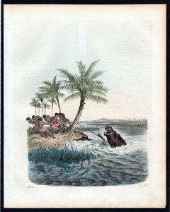 Nilpferdjagd Nilpferd Flusspferd Hippo Jagd hunting Lithographie lithograph