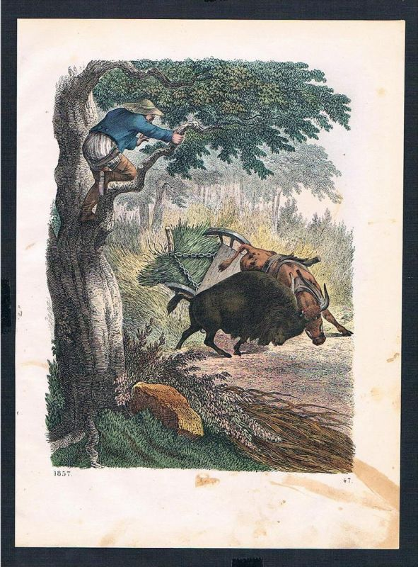 Bauer farmer Viehwagen Unfall accident Original Lithographie lithograph