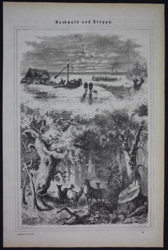 Hochwald Steppe Vegetationszonen Holzschnitt antique print