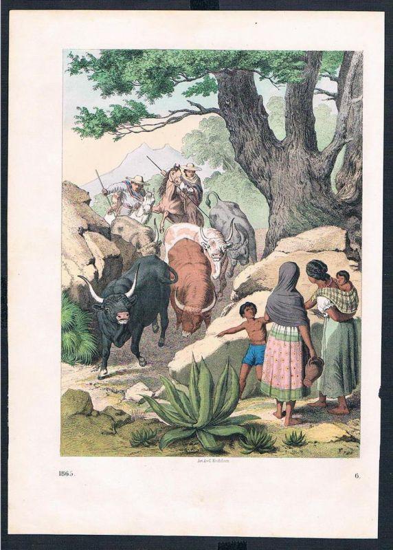 Mexiko Rinder Herde cattle Jagd hunting Amerika Original Druck print