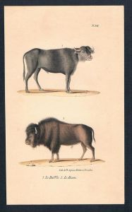 Bison Büffel Rind Rinder animal Original Lithographie lithography