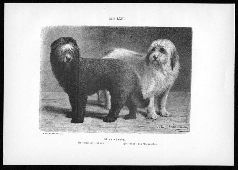 Steppenhund Hirtenhund Hund Hunde dog dogs antique print Holzstich