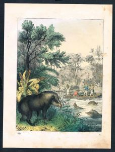 Tapir Jagd Jäger hunting Original Lithographie lithograph
