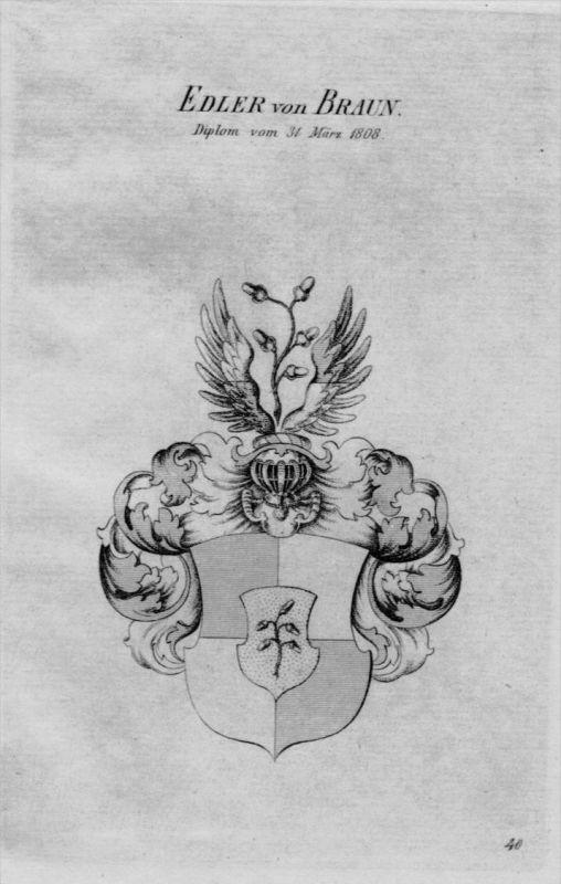 Von Braun Wappen Adel coat of arms heraldry Heraldik crest Kupferstich