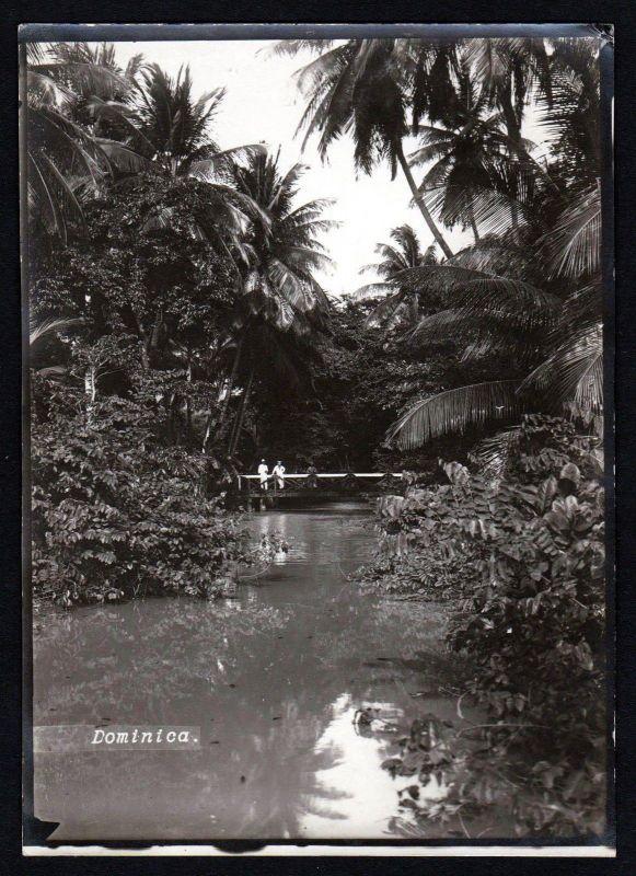 1880 - Dominica Lesser Antilles Caribbean original photo albumin albumen vintage