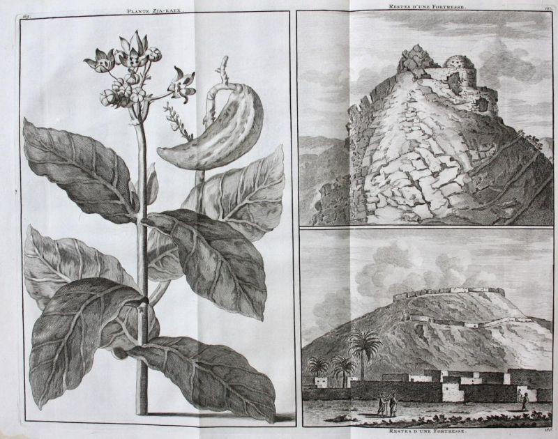 Plante Zja-Raek / Restes d'un Fortresse / Restes d'un Fortresse -  Pflanze plant plante Festung fortress ruins