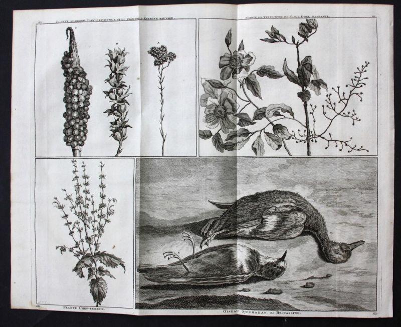 Plante Madrouen. Plante inconnue et du froment d'Espagne sauvage / Plante de Terebintes et Fleur Goel Nasranie
