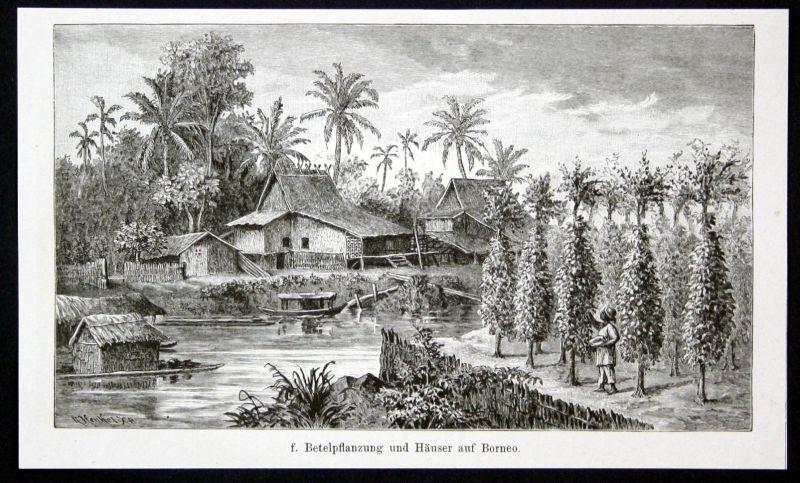 Betelpflanzung und Häuser auf Borneo. / Asien / Asia / Haus / Pflanzen