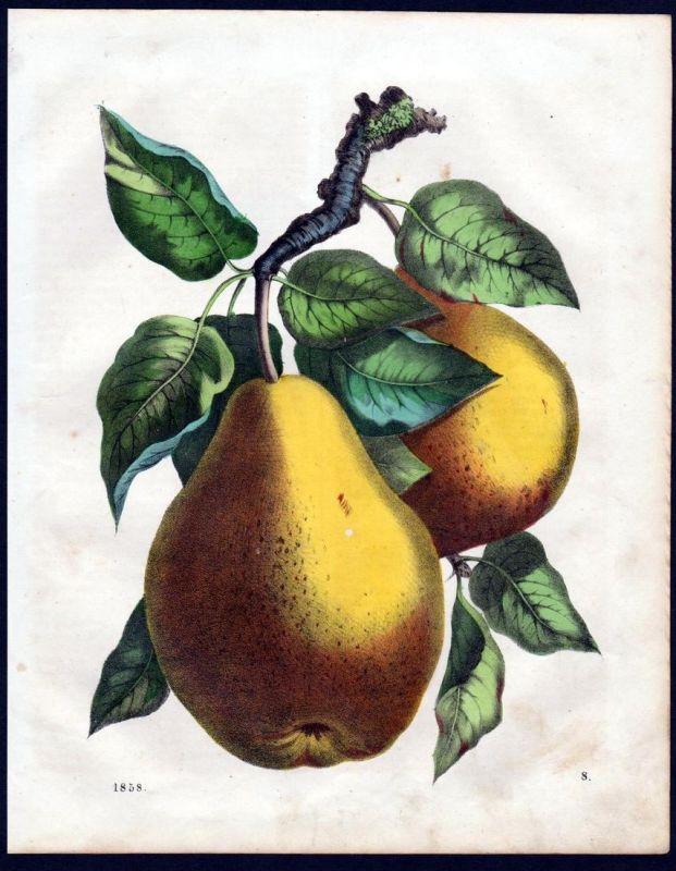 Williams Christ Birne Birnen pear pears Botanik botany Lithographie lithograph