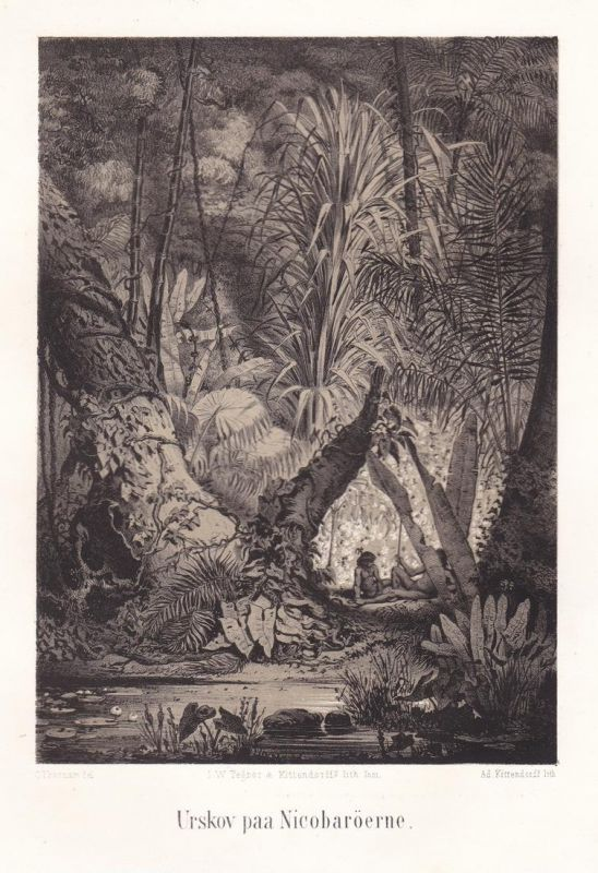 Urskov paa Nicobaröerne - Urwald jungle Nicobar Islands Ansicht Lithographie Litho