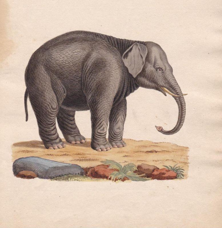 Elefant elephant éléphant Rüssel trunk trompe