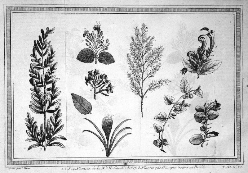 Plantes de la N.le Hollande - Pflanzen plants Australia botany Botanik Australien Kupferstich antique print