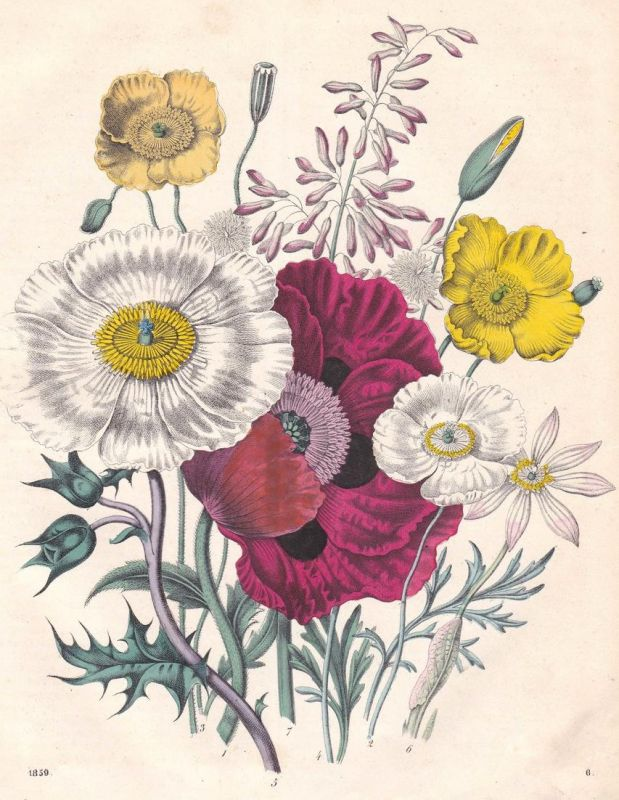 Wohnartige Pflanzen - Pflanzen Pflanze plants plant Blume flower Blumen flowers Lithographie lithograph antiqu