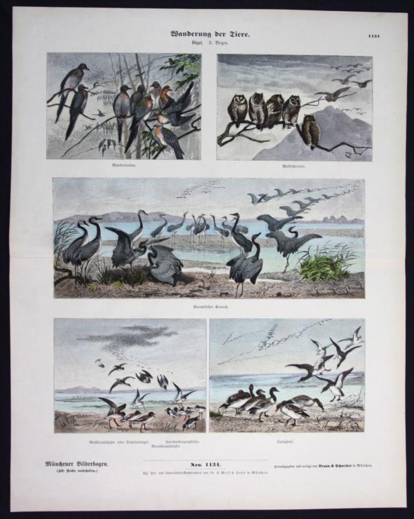 Wanderung der Tiere - Vögel - Münchener Bilderbogen
