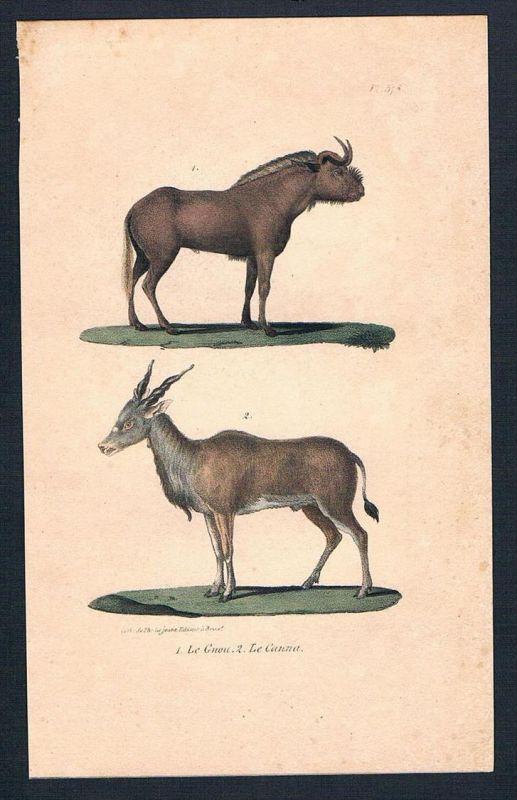 Gnu Gnus Antilope Gazelle animal Original Lithographie lithography