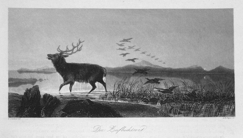 Der Zufluchtsort - Hirsch deer See lake Vögel birds Zuflucht refuge Ansicht view Stahlstich steel engraving an