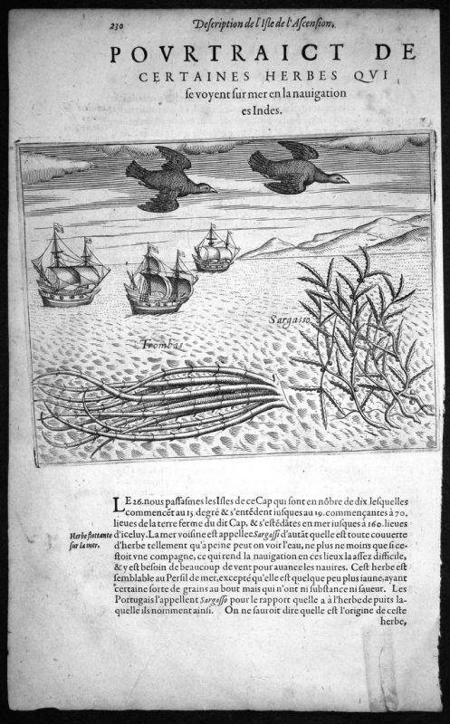 Pourtraict de Certaines Herbes qui se voyent sur mer en la nauigation es Indes - Asien Asia Indien India Schif