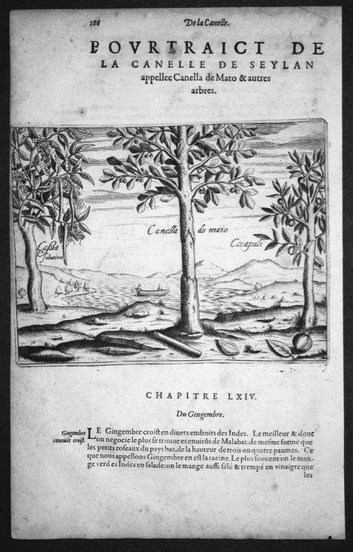 Pourtraict de la Canelle de Seylan appellee Canella de Mato & autres arbres - Ceylon Sri Lanka Asia Asien Bäum