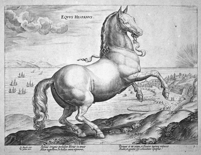 Equus Hispanus - Pferd horse Stradanus Straet Kupferstich copper engraving