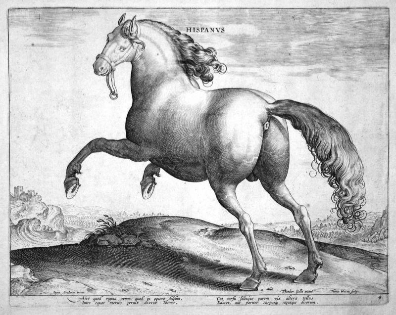 Hispanus - Pferd horse Stradanus Straet Kupferstich copper engraving