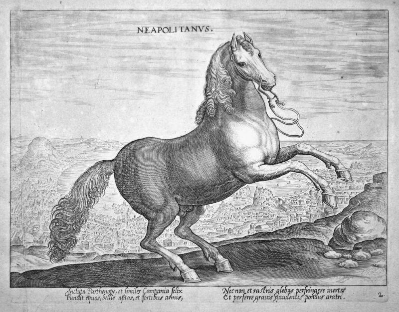 Neapolitanus - Napoli Neapel horse Pferd Stradanus Straet Kupferstich copper engraving