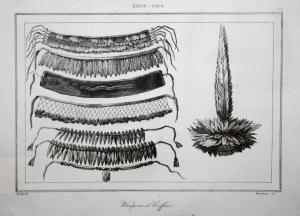 Wampums et Coiffure - Trachten costumes Indianer native Americans Amerika America Ansicht view Stahlstich stee