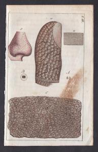 T. III. -  Haut skin Mikroskopie microscopy Medizin medicine Kupferstich copper engraving antique print