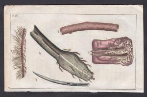 T. IV. -  Haar Haare hair Medizin medicine Mikroskopie Kupferstich copper engraving antique print
