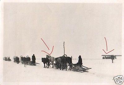 Originalfoto 7x10cm, Rußland, Panjeschlitten+Fieseler Storch