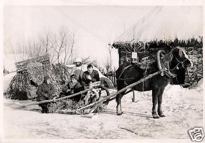 Originalfoto 7x10cm, Soldaten auf Panjeschlitten, Wintertarn