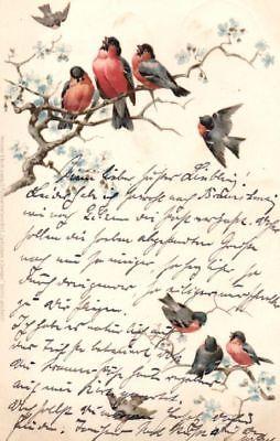Künstler Postkarte, Zwitschern in Zweigen, Serie 1043, 1899