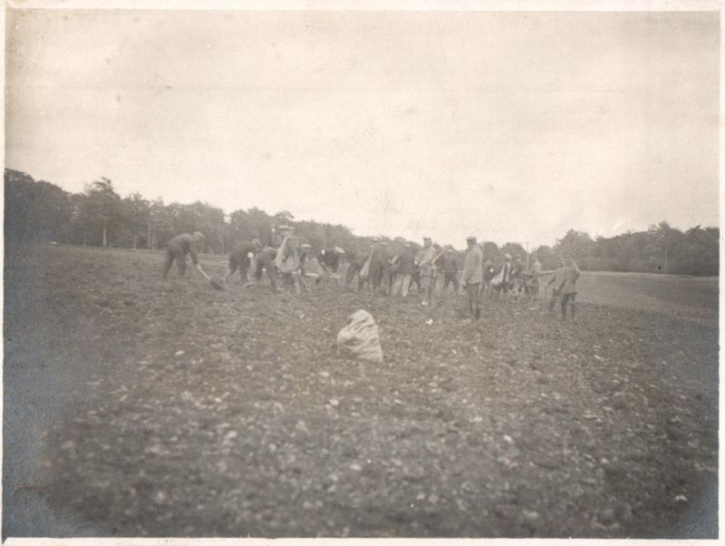 Originalfoto 8,5x11,5 Gefangene bei der Kartoffelernte 0