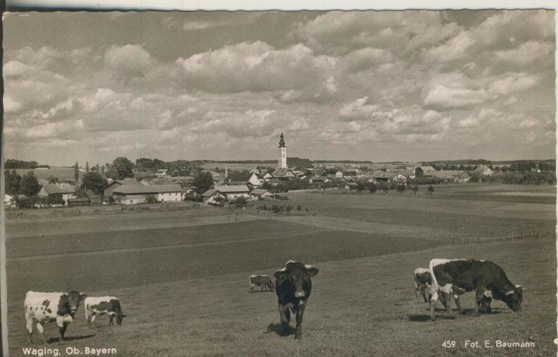 Waging v. 1956 Dorfansicht mit Kühe (AK1252)