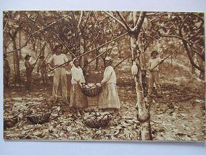 Berufe, Frauen pflücken Cacao Bohnen, Schokoladen-Fabrik Magdeburg (33723)