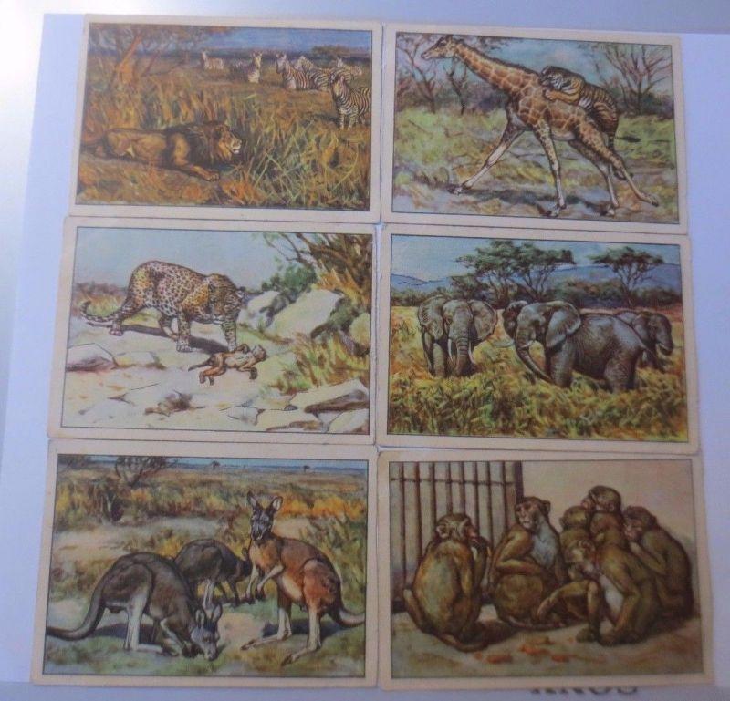 Echte Wagner Margarine Sammelbilder,  Tiere der Wildnis,  Nr.12,   1-6 ♥ (58707)