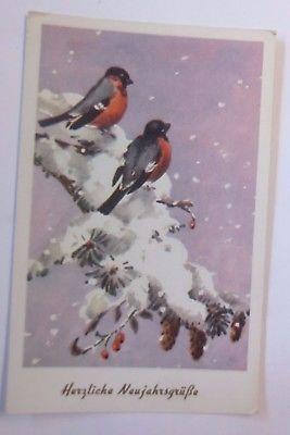 Neujahr, Tannenzweig, Vogel, Rotkehlchen,  1930 ♥  (59141)