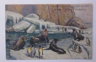 Hamburg-Stellingen, Carl Hagenbeck's Tierpark, 1913, Seelöwen, Pinguin ♥ (64222)