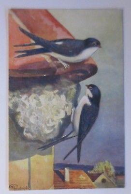 Vogel, Schwalben, Nest,    1910  ♥ (64209)