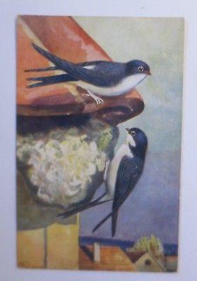Vögel, Schwalbe,     1916, signiert  ♥ (64206)