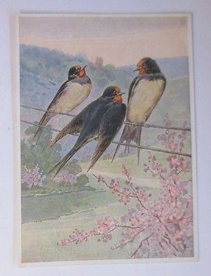 Vögel, Rauchschwalbe, R. Schulz,     1916, signiert  ♥ (64205)