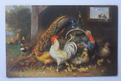 Vögel, Pfau, Hahn, Pute, Küken,    1916, signiert  ♥ (64204)