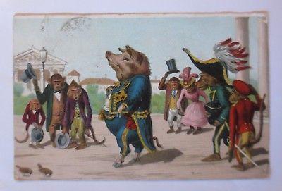 Personifiziert, Affen, Wildschwein,  1905 ♥ (35005)