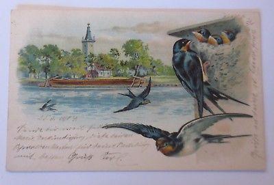 Vogel, Schwalben, Nest, 1904  ♥ (64942)