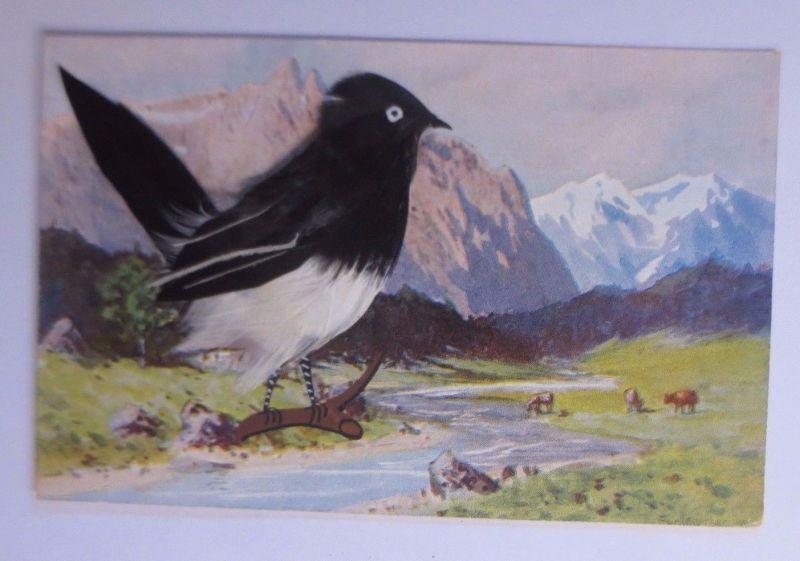 Vogel, Elster, Echte Federn, 1900 ♥ (4327)